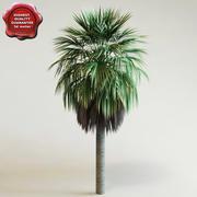 Washingtonia robusta 3d model