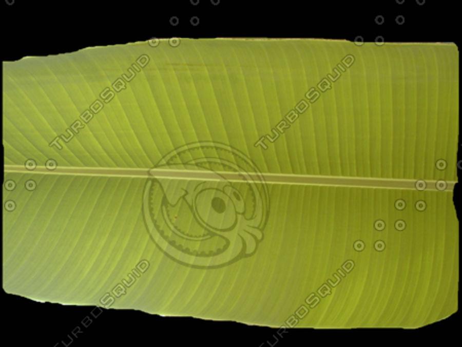 drzewo bananowe royalty-free 3d model - Preview no. 4