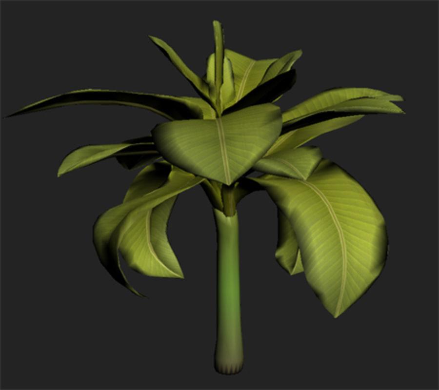 drzewo bananowe royalty-free 3d model - Preview no. 6