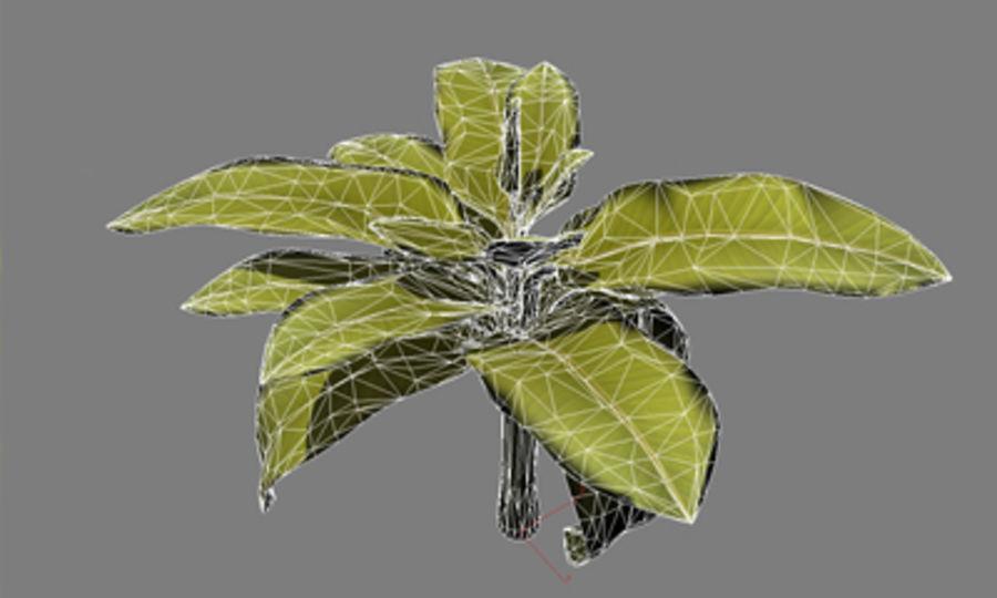 drzewo bananowe royalty-free 3d model - Preview no. 3