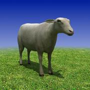 Low poly Sheep 3D Model 3d model
