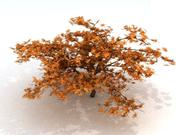 3D Maple Tree 3d model