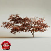 Acer Palmatum 3d model