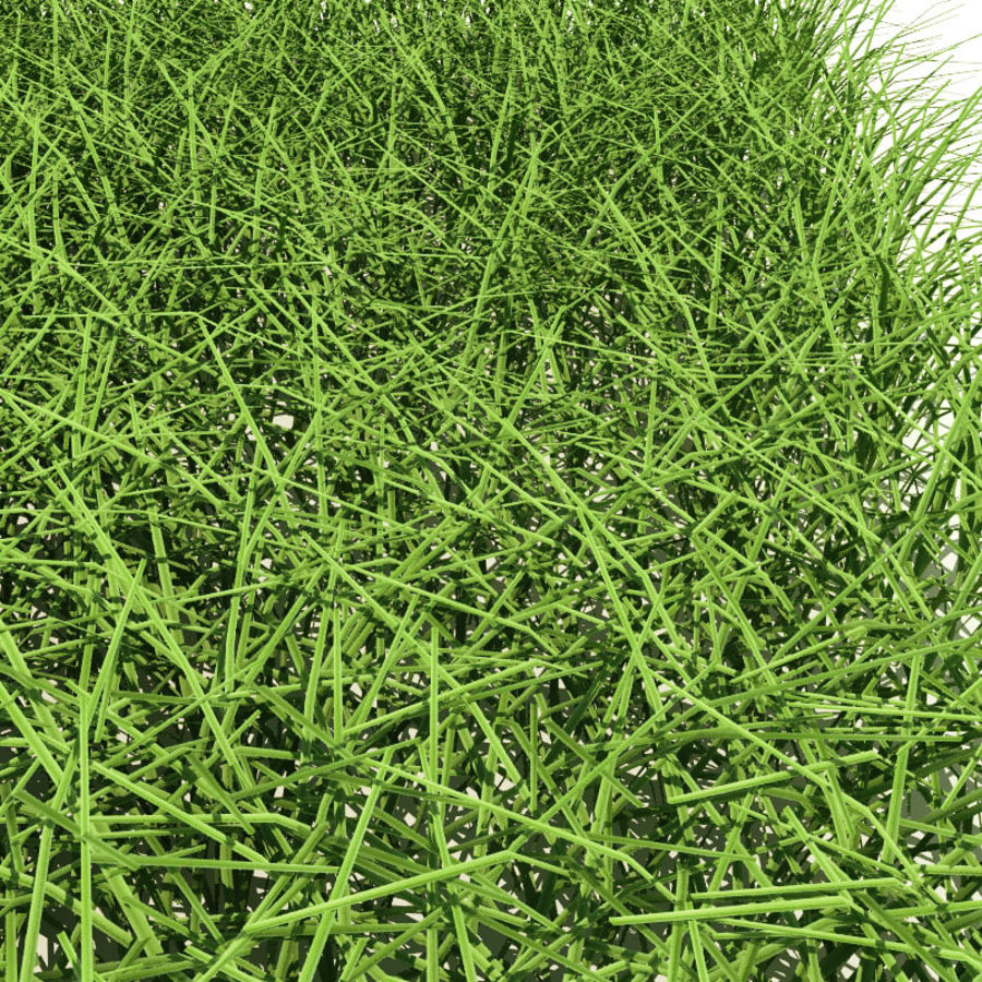 New England Warm Season Grass royalty-free 3d model - Preview no. 4