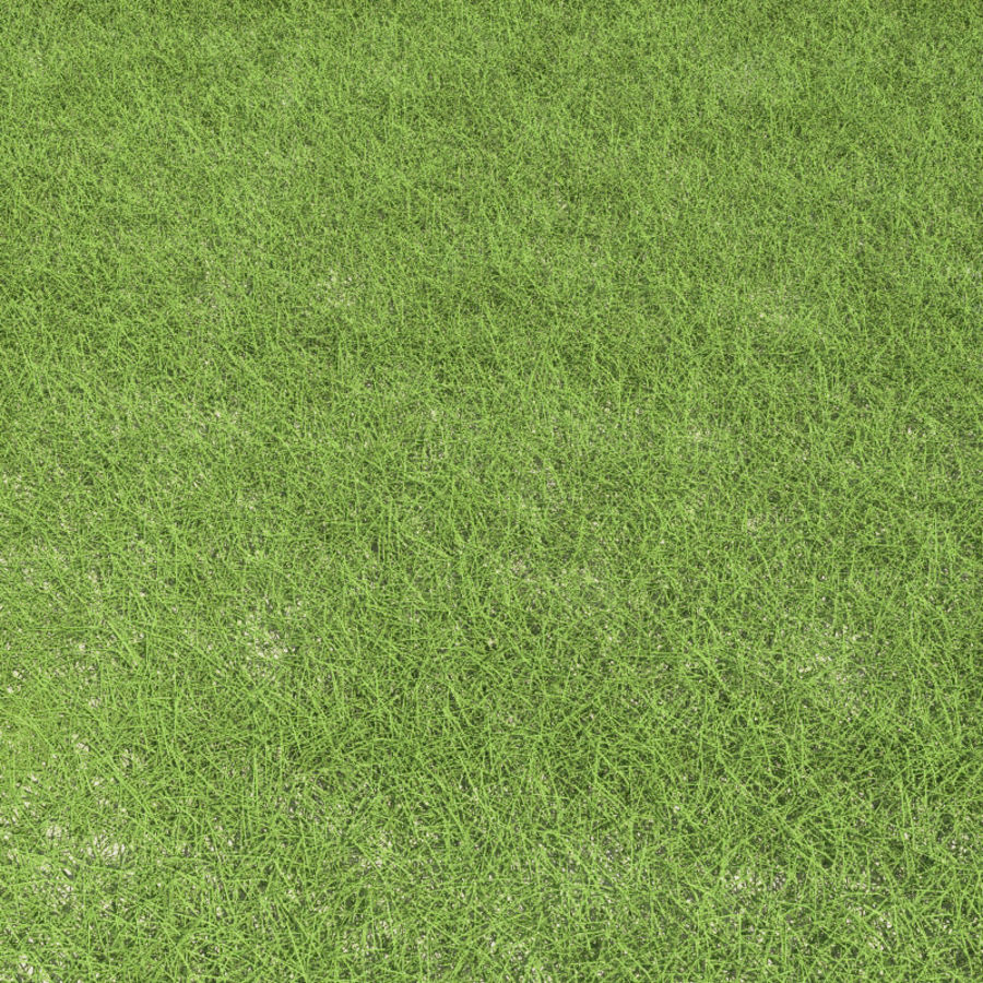 New England Warm Season Grass royalty-free 3d model - Preview no. 5