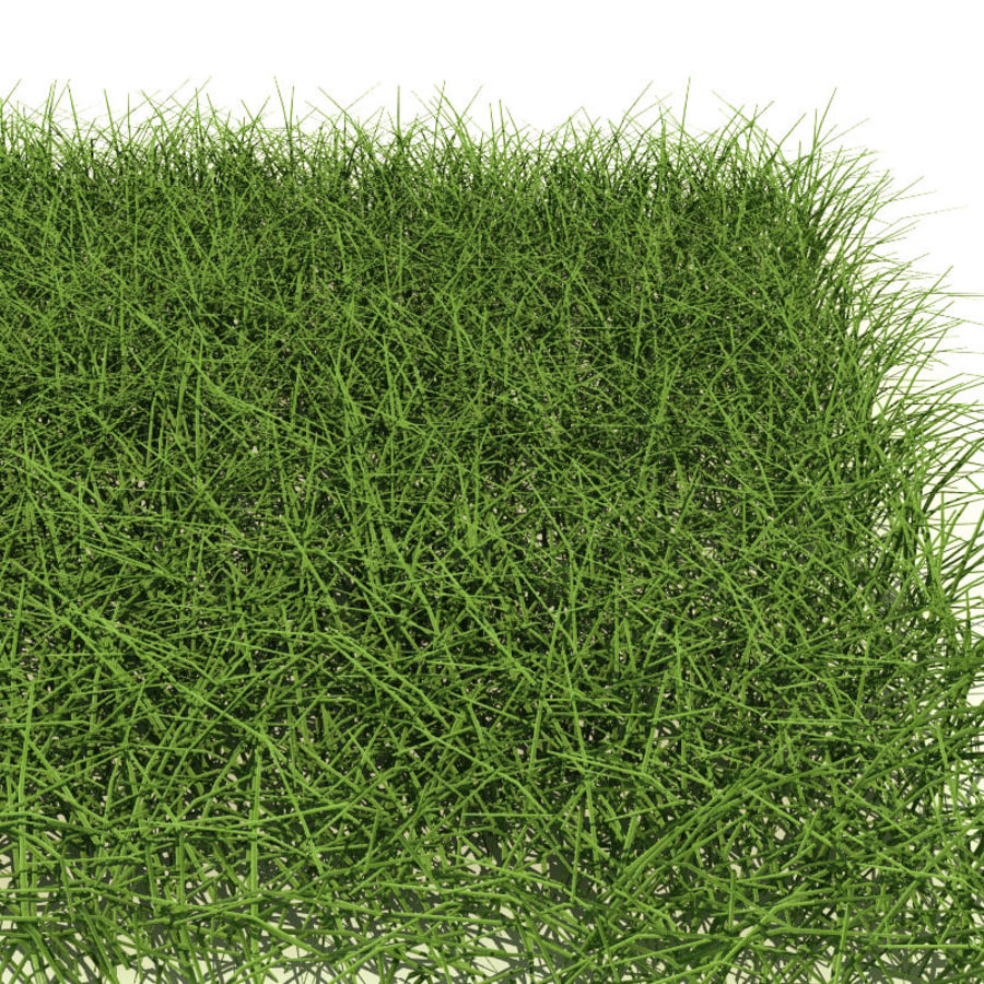 New England Warm Season Grass royalty-free 3d model - Preview no. 3