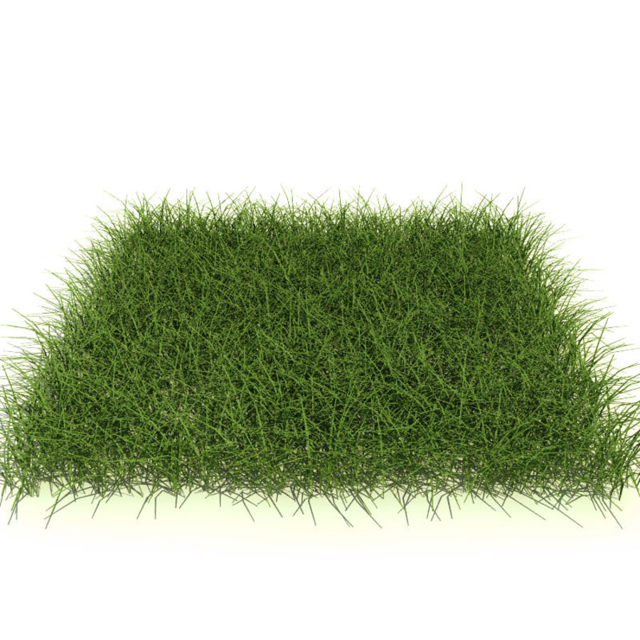 New England Warm Season Grass royalty-free 3d model - Preview no. 2