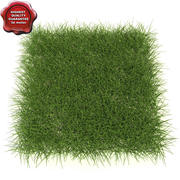 New England Warm Season Grass 3d model