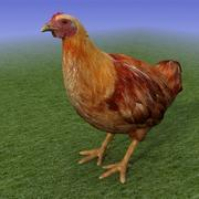 Brown Chicken_3D Model 3d model