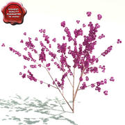 Cercis canadensis (Flame) 3d model
