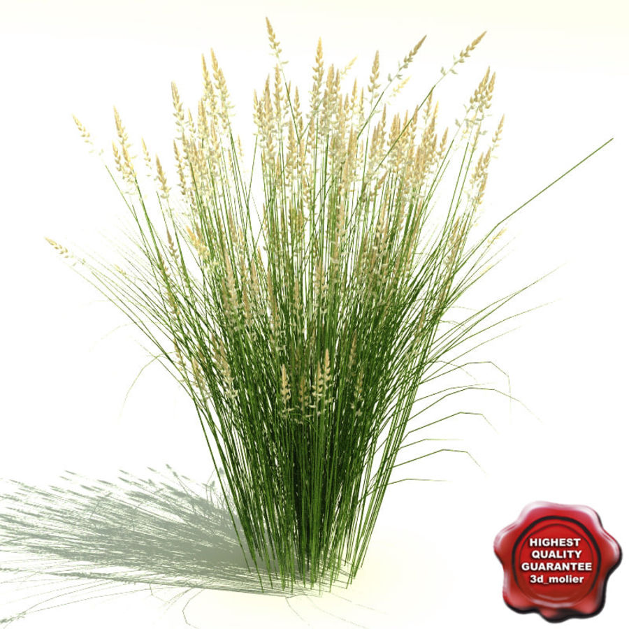 Calamagrostis x acutiflora (Karl Foerster) royalty-free 3d model - Preview no. 1