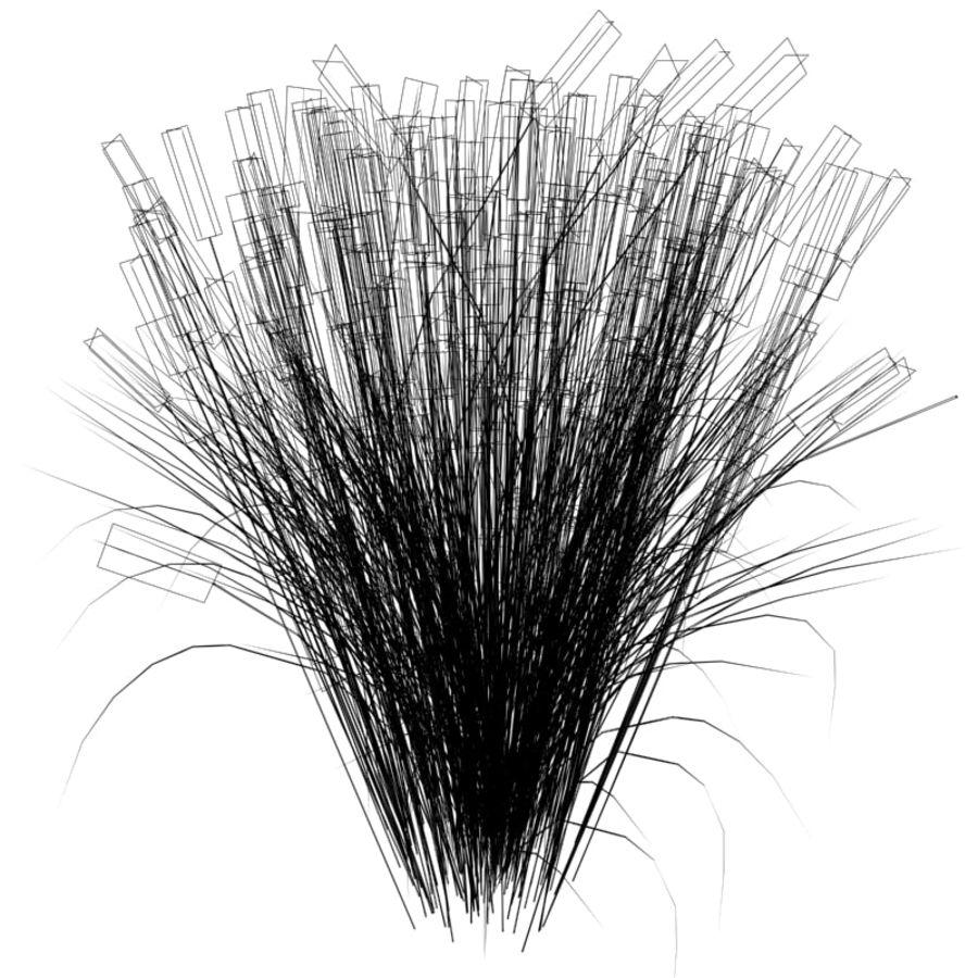 Calamagrostis x acutiflora (Karl Foerster) royalty-free 3d model - Preview no. 5