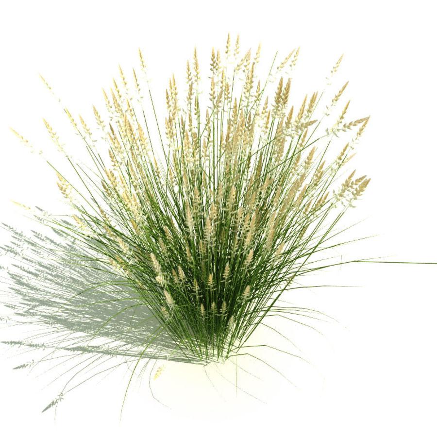 Calamagrostis x acutiflora (Karl Foerster) royalty-free 3d model - Preview no. 2