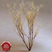 Service Berry (Amelanchier Arborea) 3d model