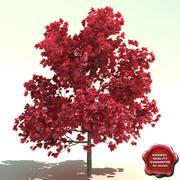 Acer rubrum (Red Sunset) 3d model