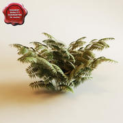 Ferns 3d model