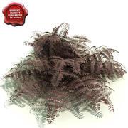 Athyrium niponicum (Burgundy Lace) 3d model