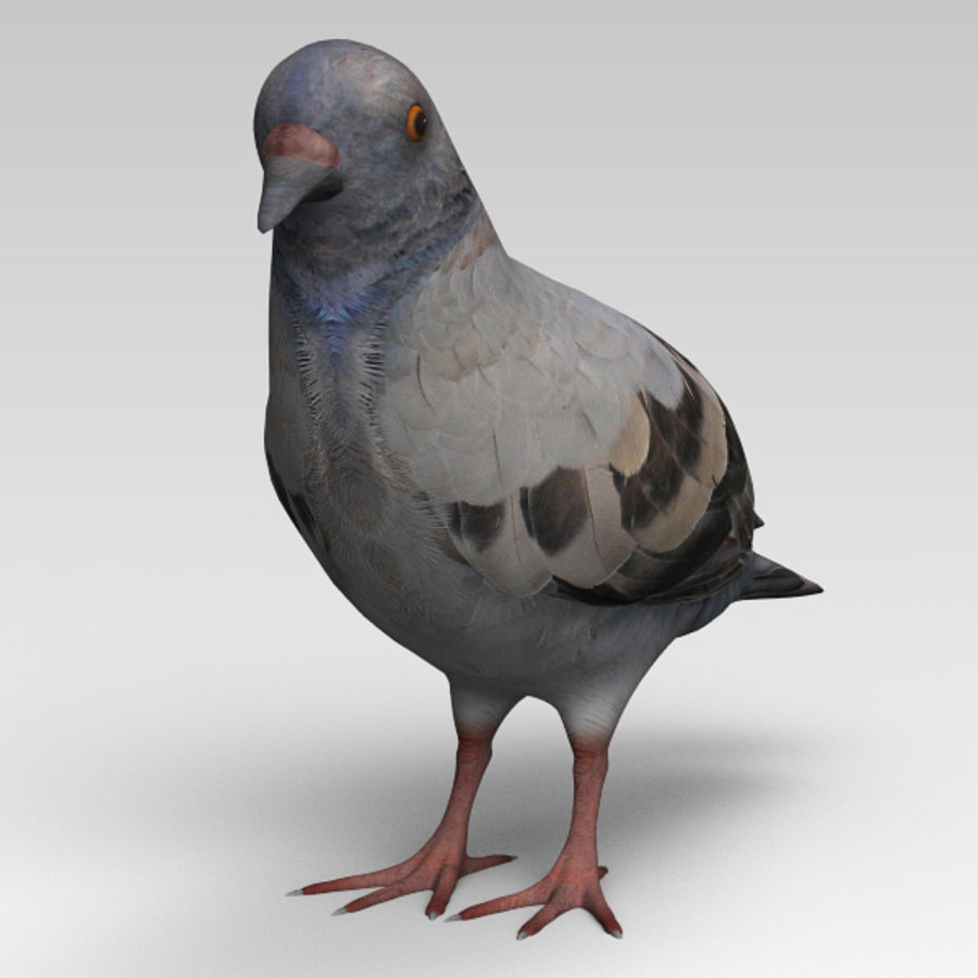 Pigeon royalty-free 3d model - Preview no. 4