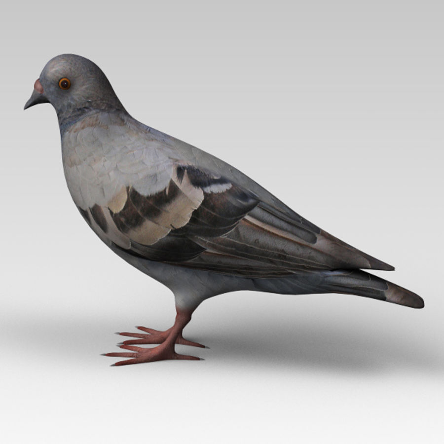 Pigeon royalty-free 3d model - Preview no. 2