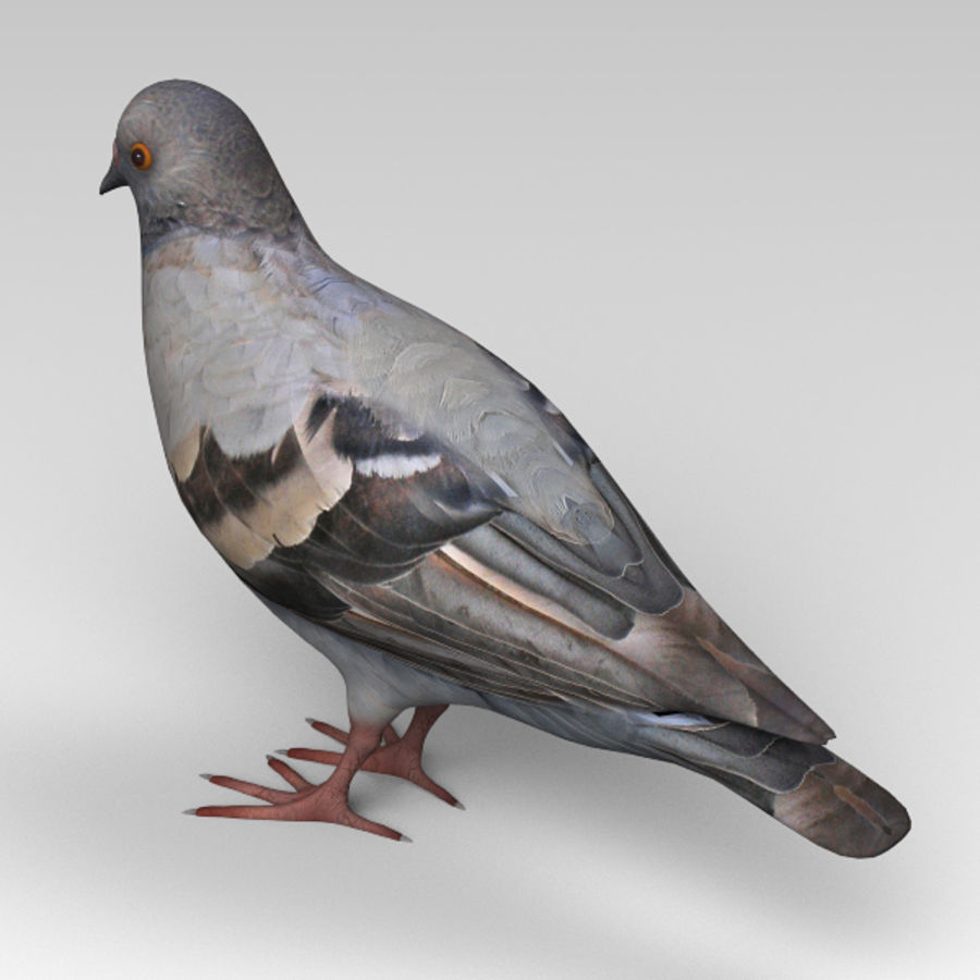 Pigeon royalty-free 3d model - Preview no. 3