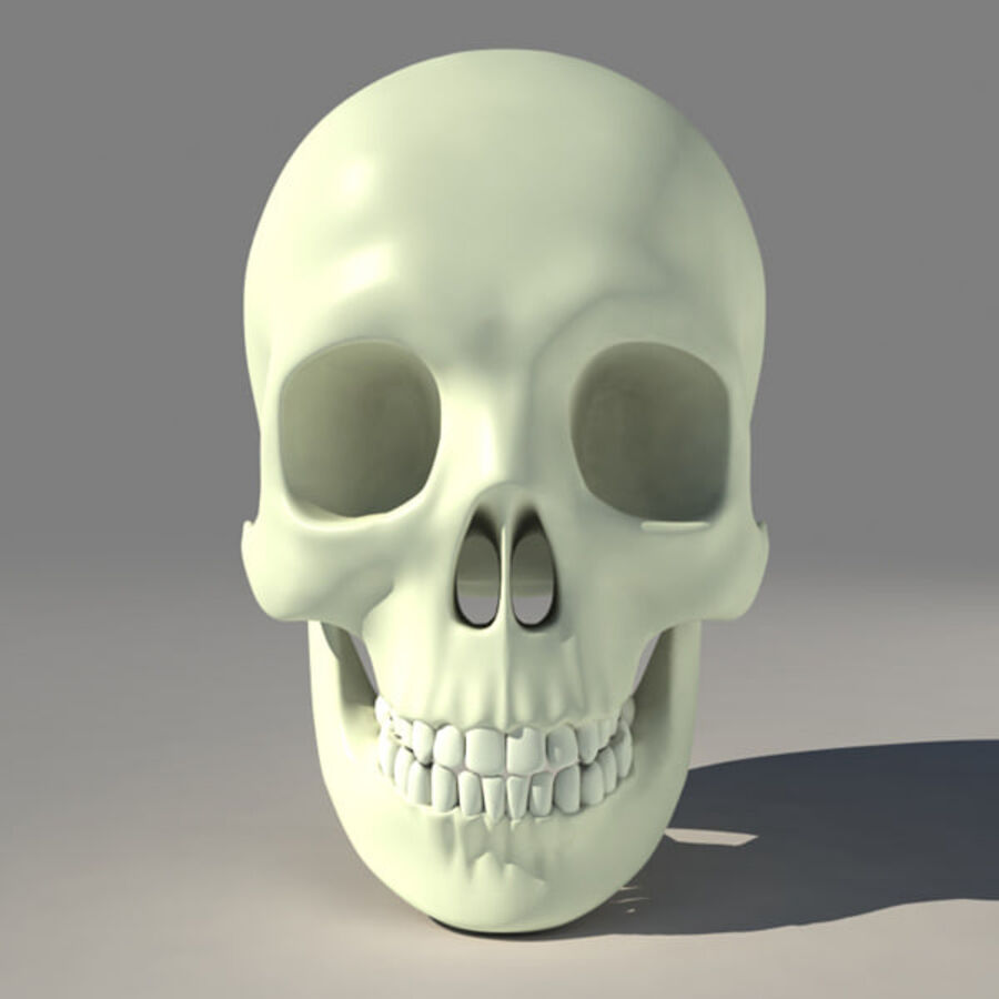 人类的头骨 royalty-free 3d model - Preview no. 2