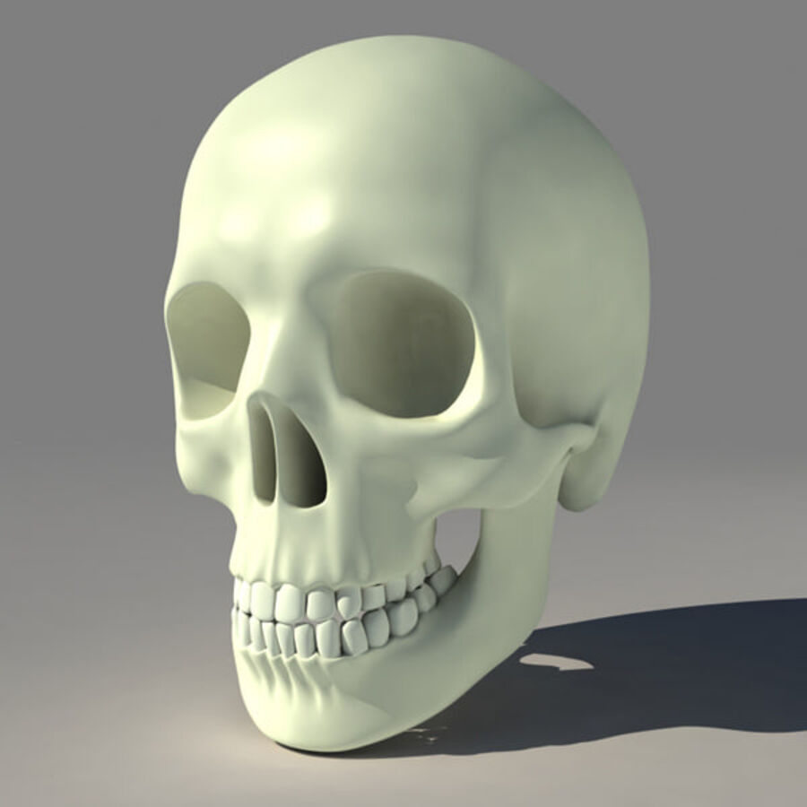 人类的头骨 royalty-free 3d model - Preview no. 1
