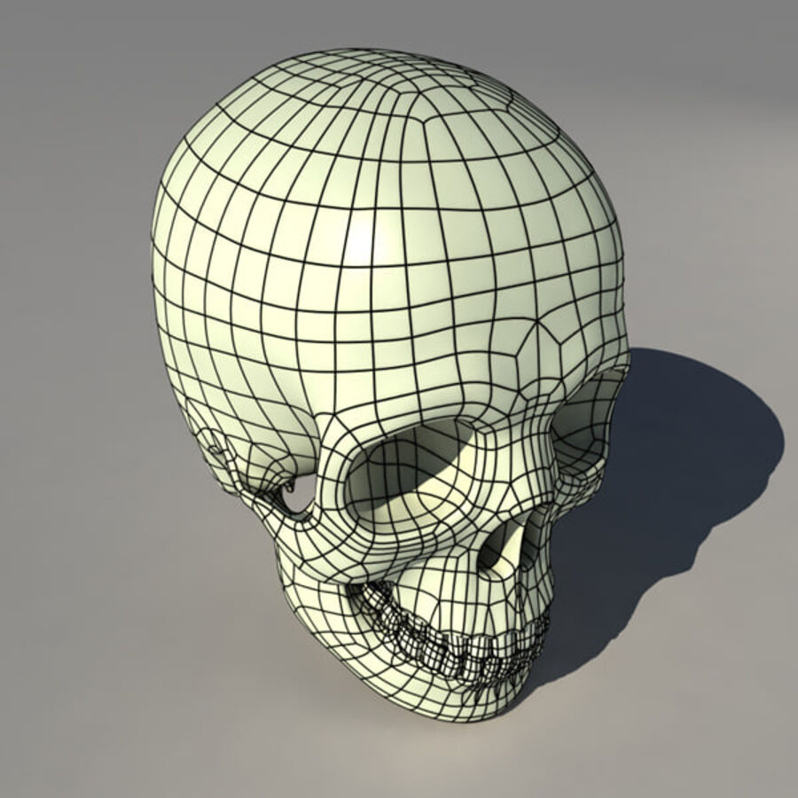 人类的头骨 royalty-free 3d model - Preview no. 7
