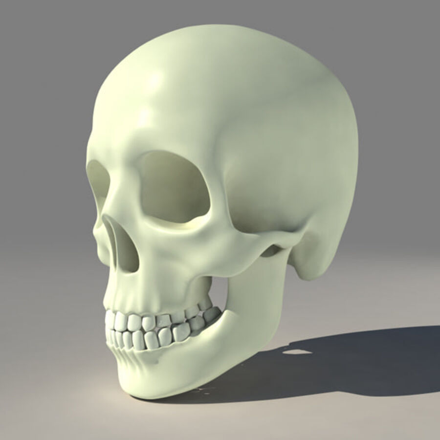 人类的头骨 royalty-free 3d model - Preview no. 4