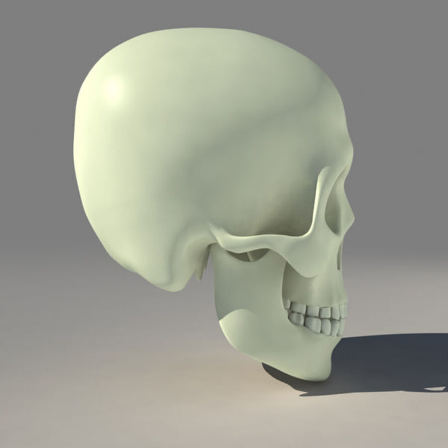 人类的头骨 royalty-free 3d model - Preview no. 3