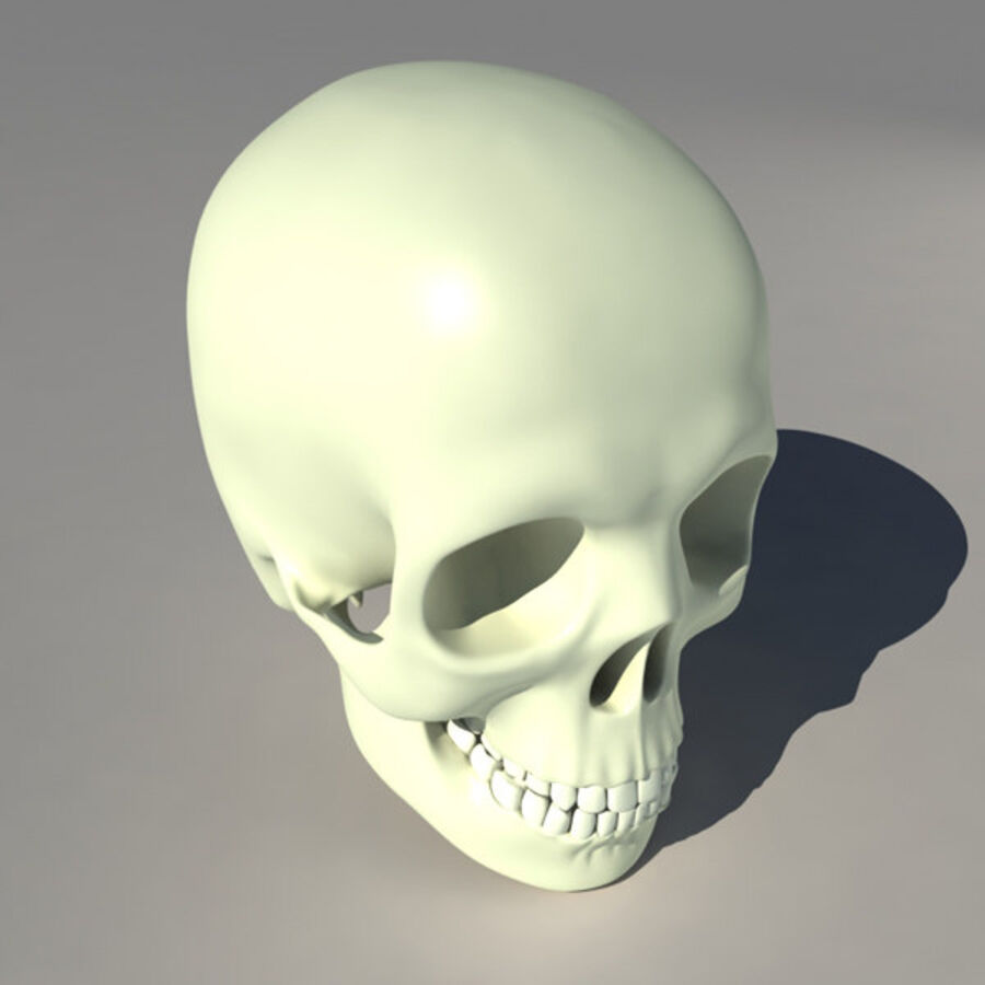 人类的头骨 royalty-free 3d model - Preview no. 6