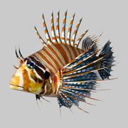 Feuerfische 3d model