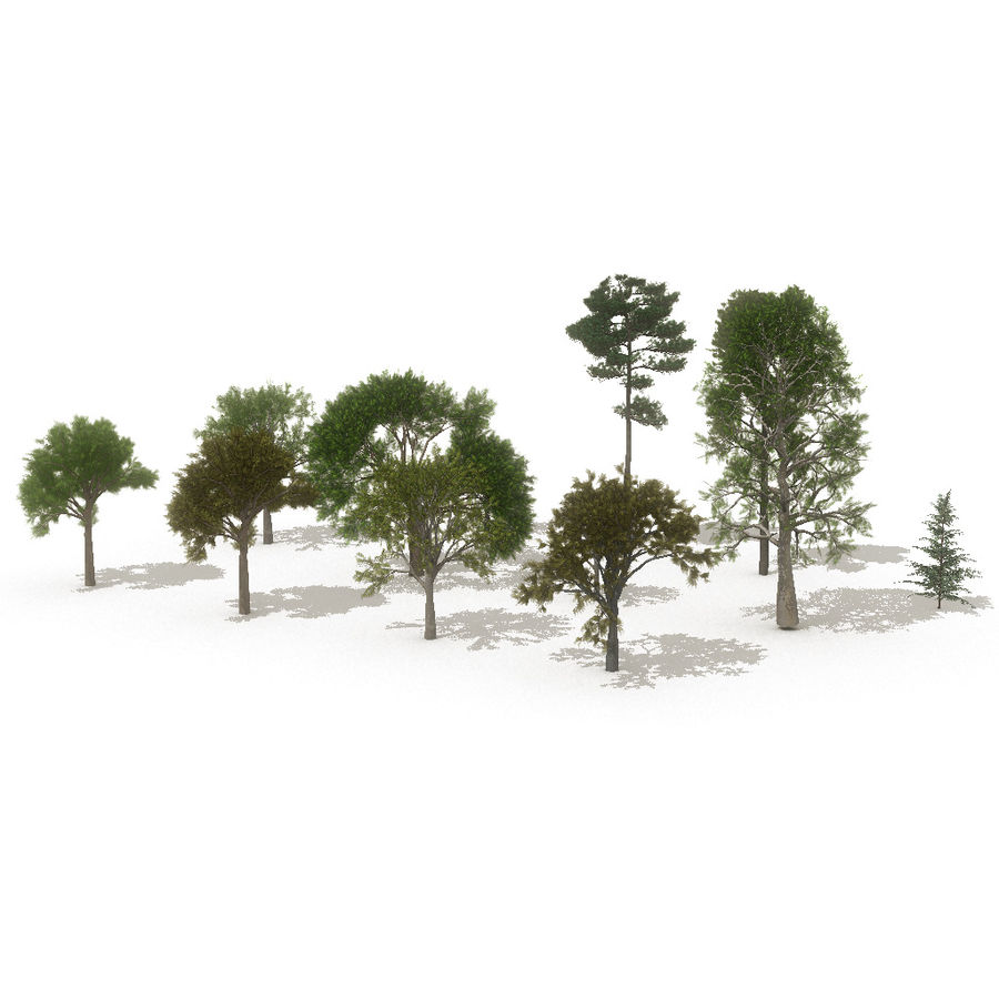 12 arbres européens royalty-free 3d model - Preview no. 15