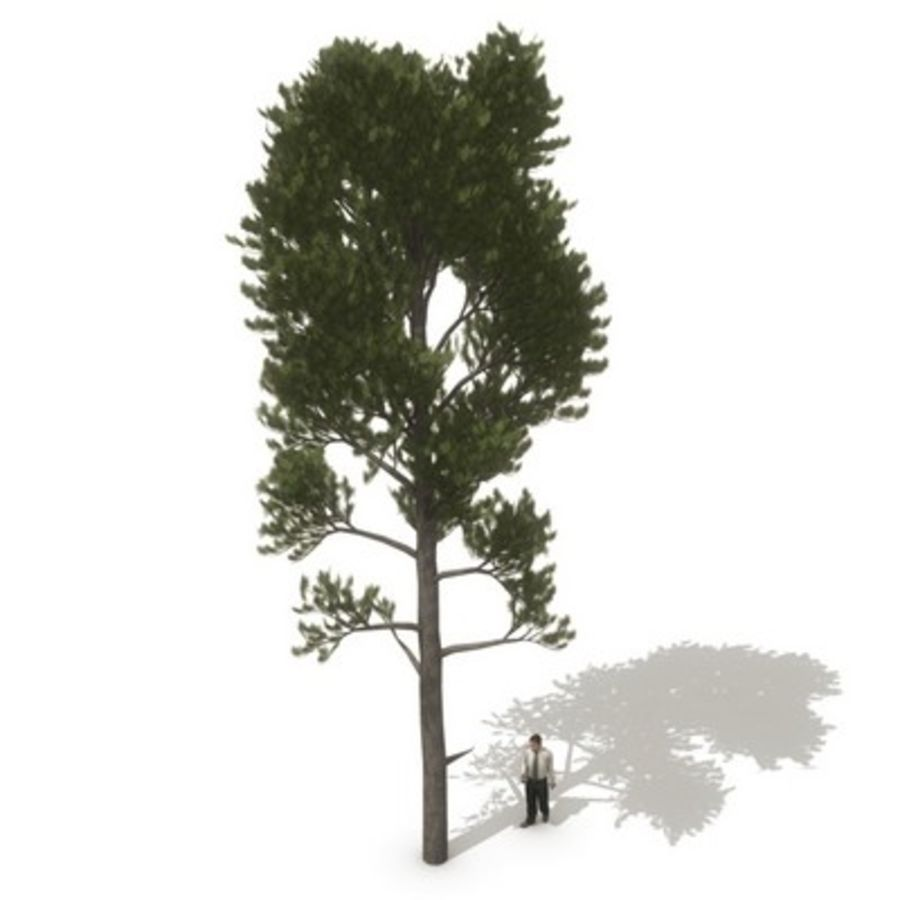 12 arbres européens royalty-free 3d model - Preview no. 6