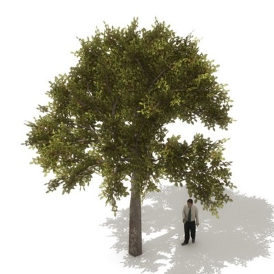 12 arbres européens royalty-free 3d model - Preview no. 14