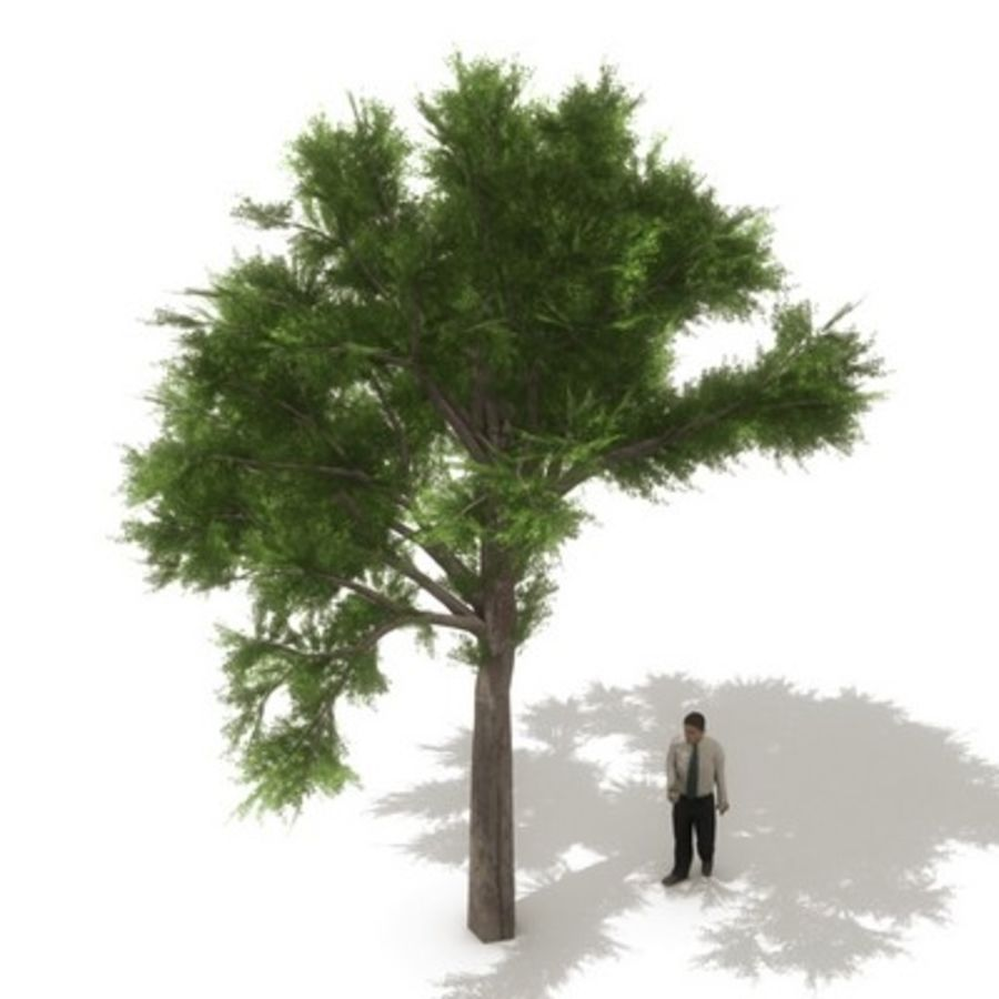 12 arbres européens royalty-free 3d model - Preview no. 13
