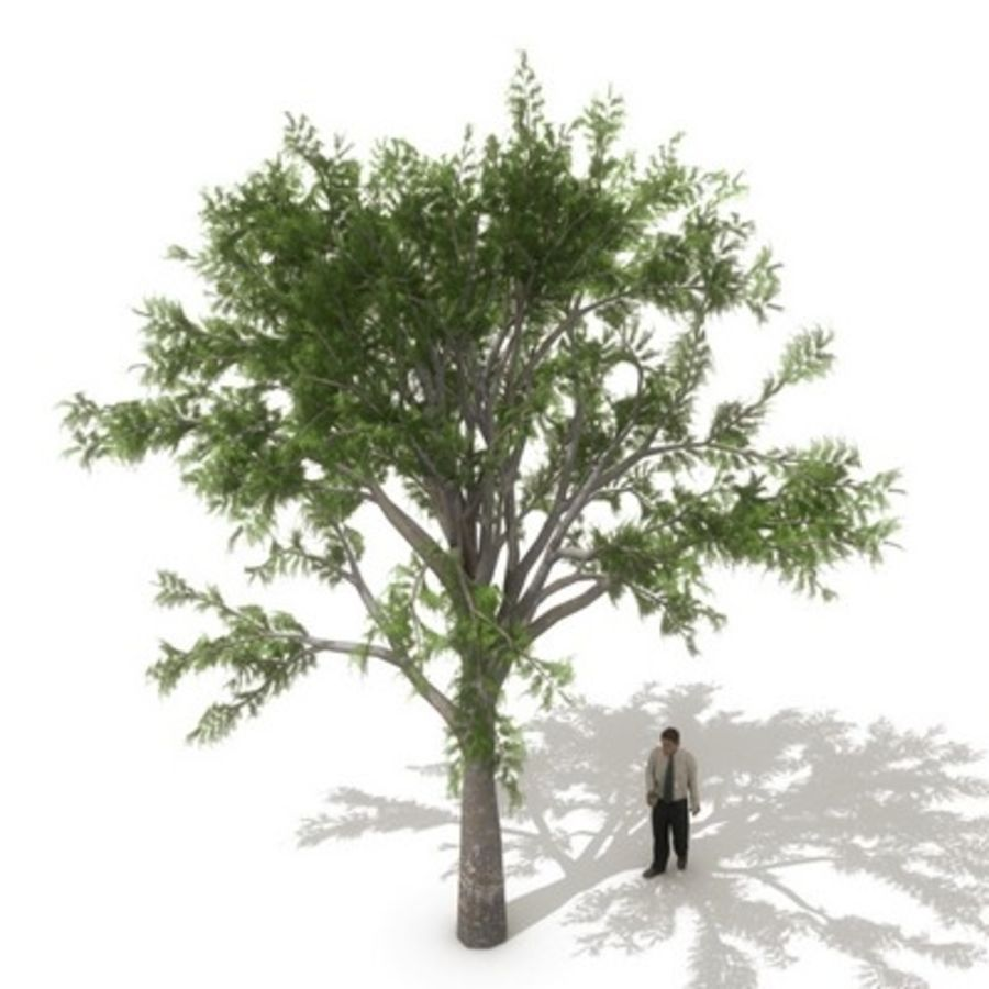 12 arbres européens royalty-free 3d model - Preview no. 3