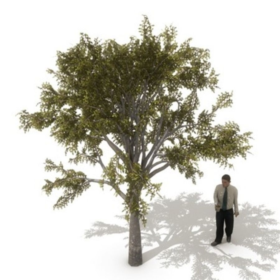 12 arbres européens royalty-free 3d model - Preview no. 11