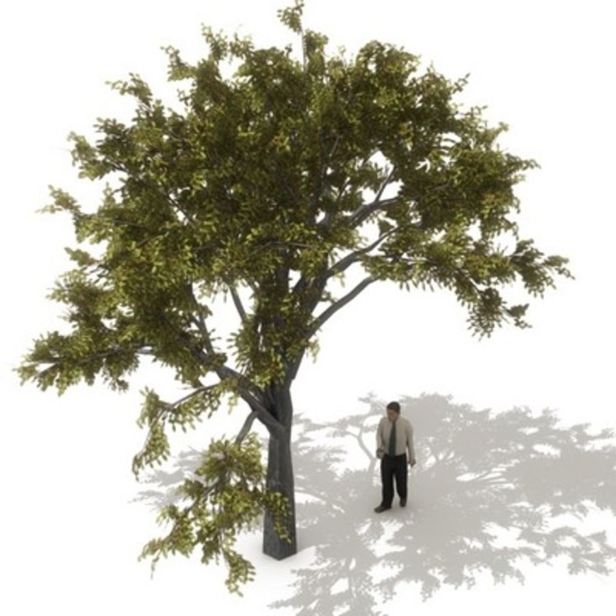 12 arbres européens royalty-free 3d model - Preview no. 9