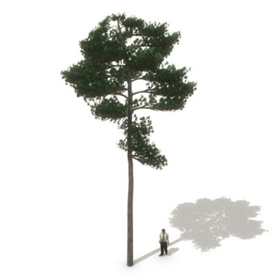 12 arbres européens royalty-free 3d model - Preview no. 5