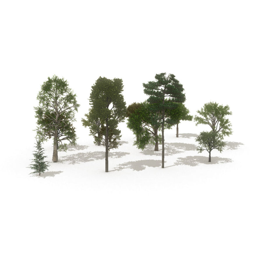 12 arbres européens royalty-free 3d model - Preview no. 2