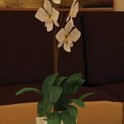 орхидея орхидея 3d model
