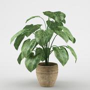 plant_06 3d model