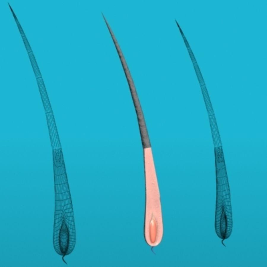 髪の解剖学 royalty-free 3d model - Preview no. 1