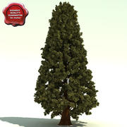 Thuja Plicata (Western Red Cedar) 3d model