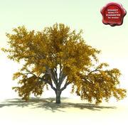 Quercus Garyana (Oregon White Oak) 3d model