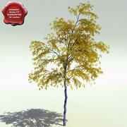 Populus Tremuloides (Álamo temblón Aspen) modelo 3d
