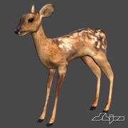Young Deer 3d model