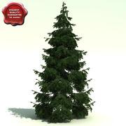 Picea Omorika (Serbian Spruce) 3d model