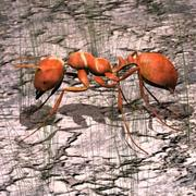 Red Fire Ant 3d model