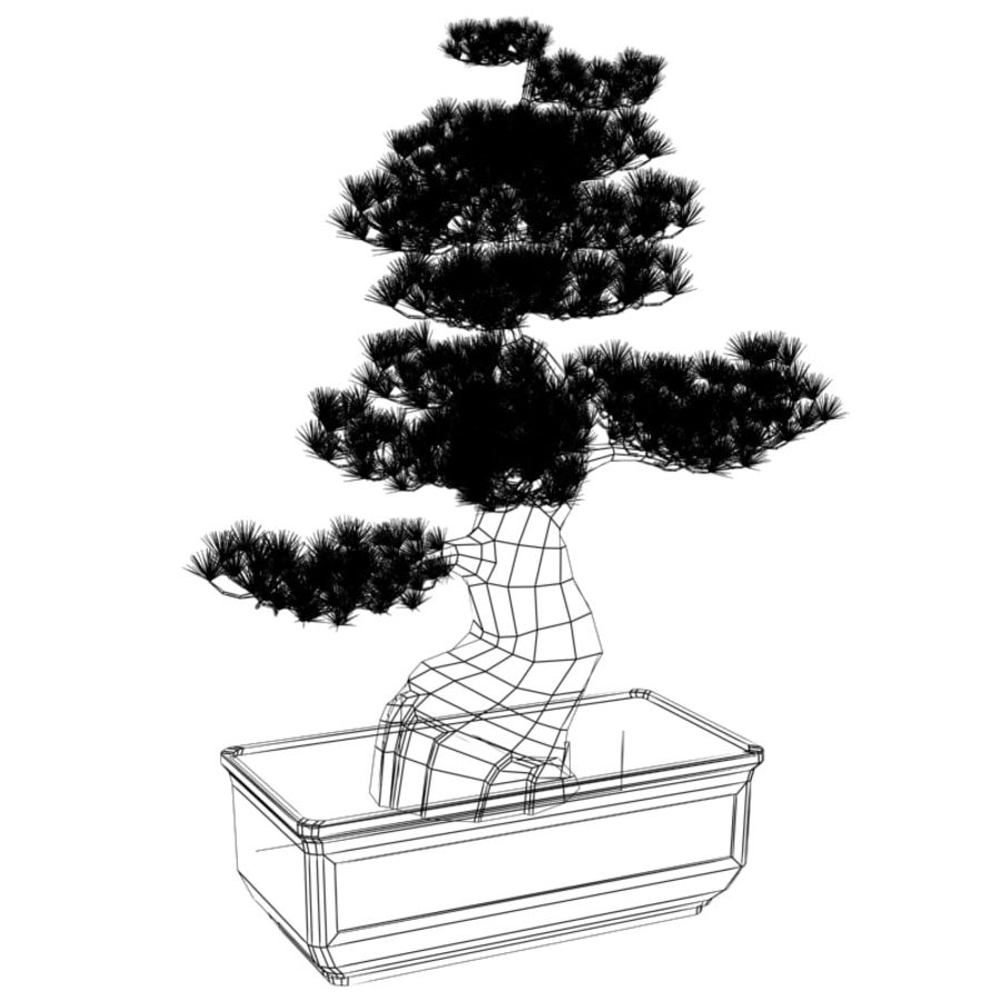 Bonsai tree royalty-free 3d model - Preview no. 6